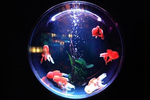 demenager-aquarium