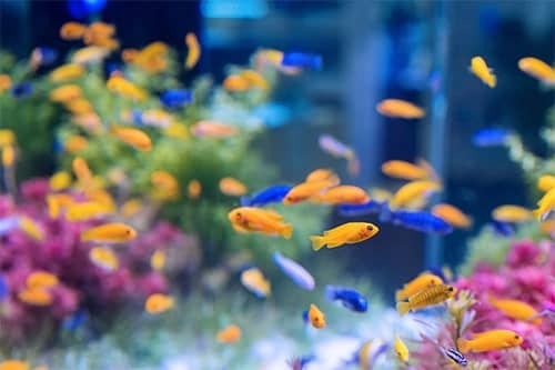 comment-demenager-aquarium-dmd-paris